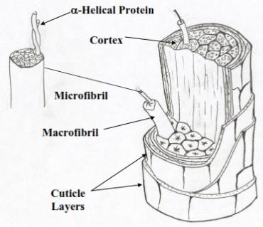 Human Hair Profiling with FTIR Spectroscopy and Chemometrics