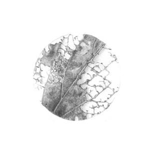 disegno a matita 5, 2020 - matita su carta - 12 x 12 cm