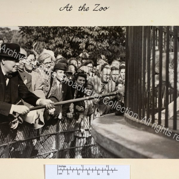 """Photo shows WSC leaning forward holding a stick through the bars of a cage to feed a lion [""""Rota""""]. WSC is wearing a suit and hat and has a cigar in his mouth."""