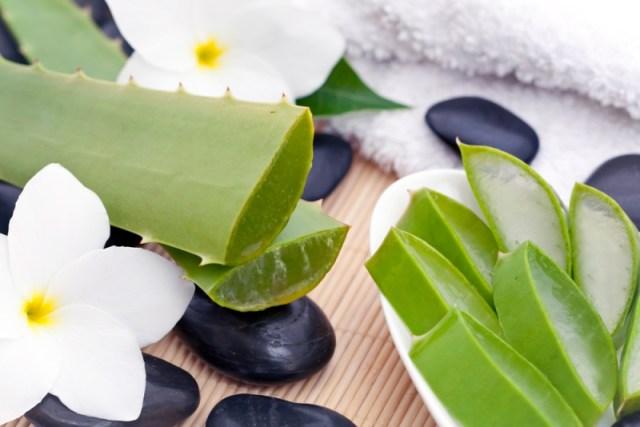 ClioMakeUp-ingredienti-prodotti-viso-aloe-vera