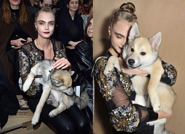 ClioMakeUp-animali-star-cuccioli-cagnolino-cara-delevigne