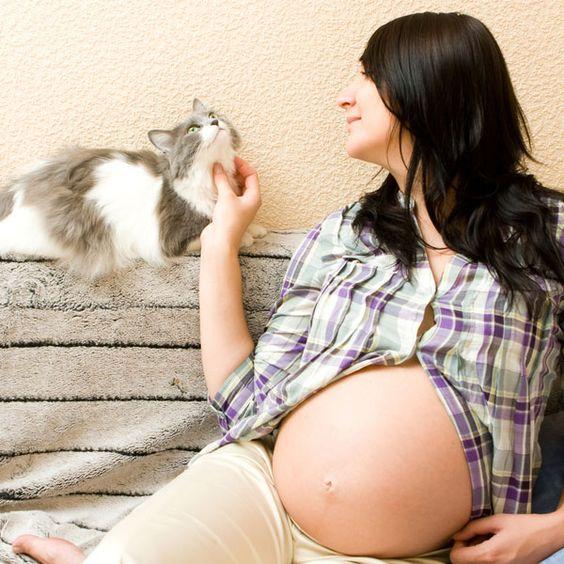cliomakeup-gatti-in-gravidanza-12-come-fare