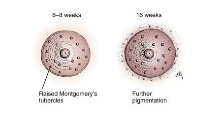cliomakeup-come-cambia-il-seno-in-gravidanza-18