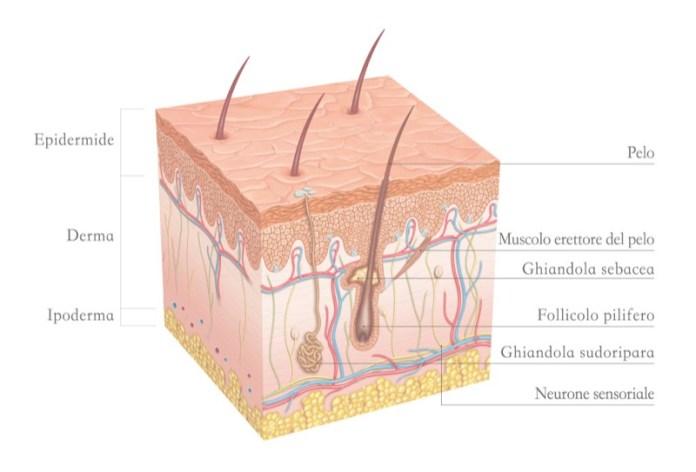 cliomakeup-microblading-vs-tatuaggio-sopracciglia-trucco-permanente-8