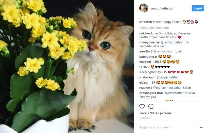 cliomakeup-gatti-famosi-instagram-1