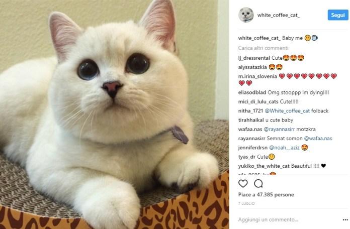 Gli 8 Gatti Più Famosi E Simpatici Di Instagram Che Ci Hanno Fatto