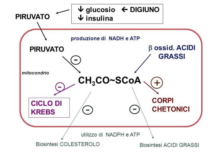 cliomakeup-dieta-chetogenica-corpi-chetonici-formazione-3