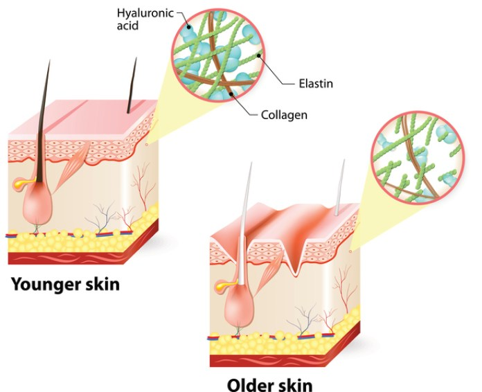 cliomakeup-benefici-acido-ialuronico-2-percentuale-nella-pelle