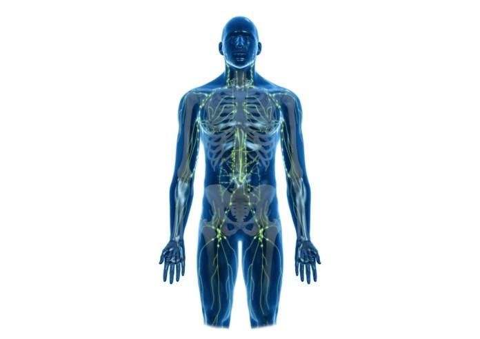 cliomakeup-giornata-mondiale-linfedema-2-sistema-linfatico