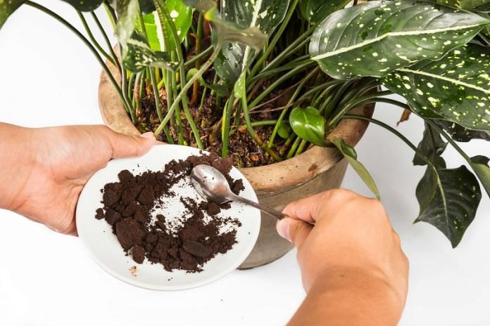 cliomakeup-riciclare-avanzi-6-fertilizzare-piante-caffè