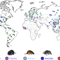 Phylogeny and Origins of Hantavir... preview & related info | Mendeley