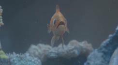 singing-fish-2