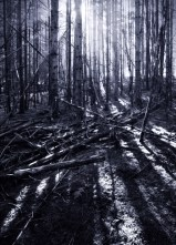 The Dark Forest 8