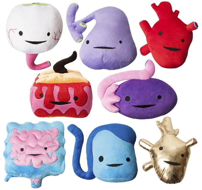 I Heart Guts Plush Internal Organs Soft Toy   eBay