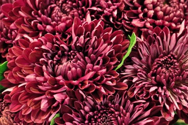 New Covent Garden Flower Market - Chrysanthemum