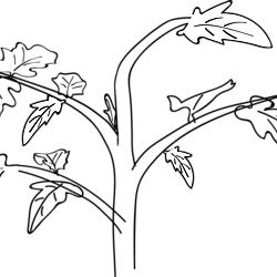 Plant Stem Black And White 3