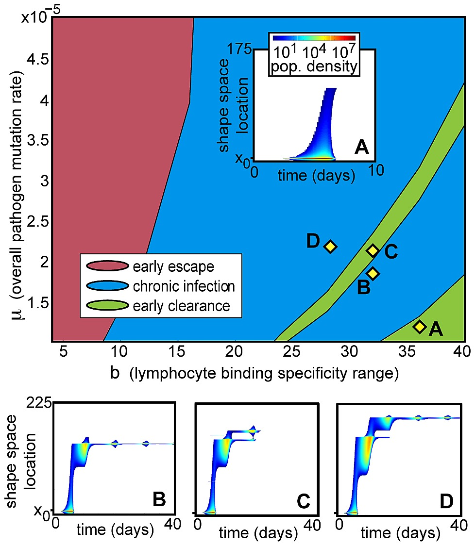 medium resolution of phase diagram of deterministic infection trajectories under low homeostatic pressure as a function of mutation rate and t cell specificity range