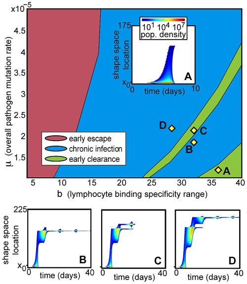 small resolution of phase diagram of deterministic infection trajectories under low homeostatic pressure as a function of mutation rate and t cell specificity range