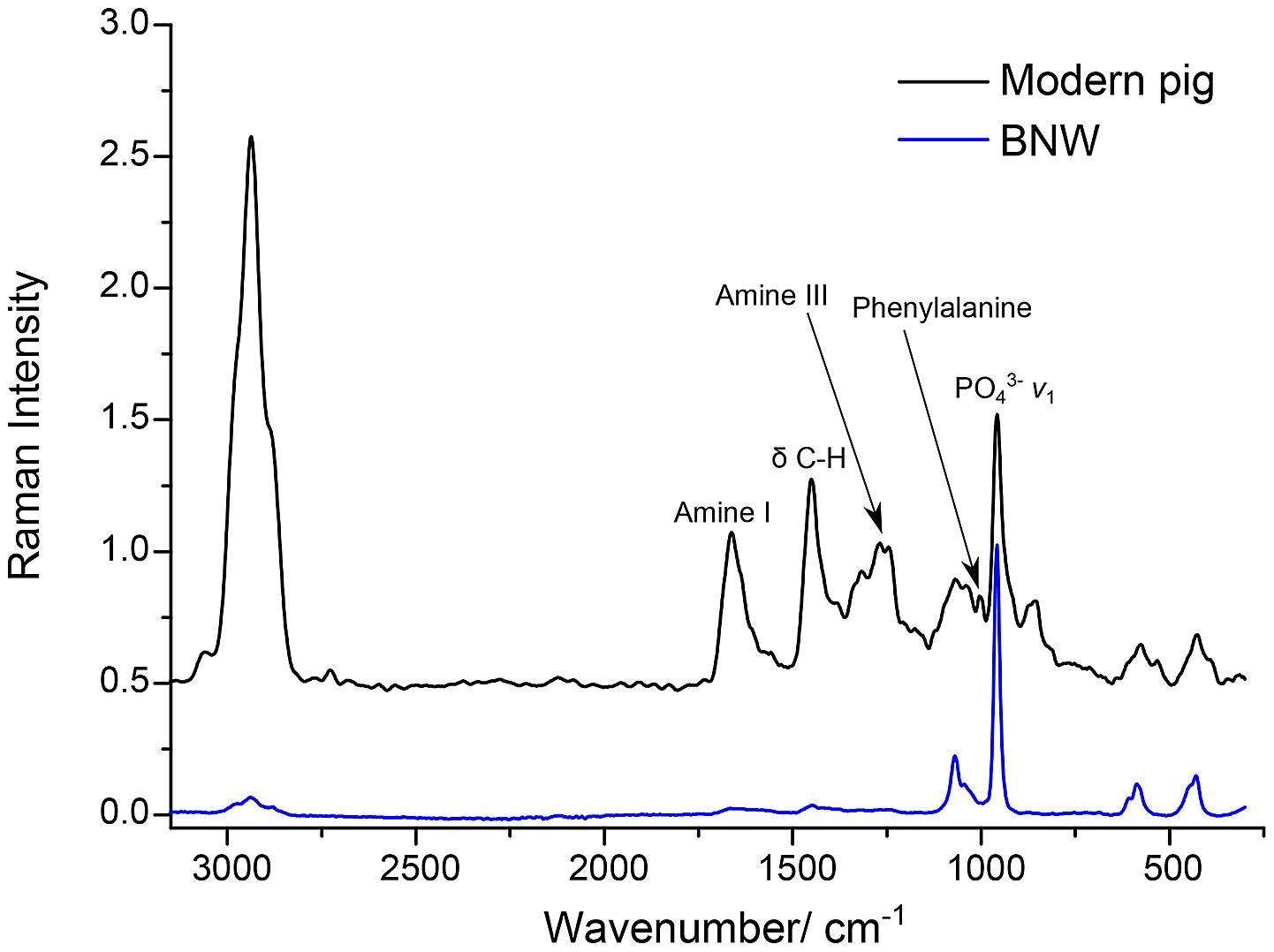 hight resolution of the ft raman spectra of a modern pig bone and the bone sample from burial 511 from ban non wat raman id 41 one of the 6 bones that displayed high protein