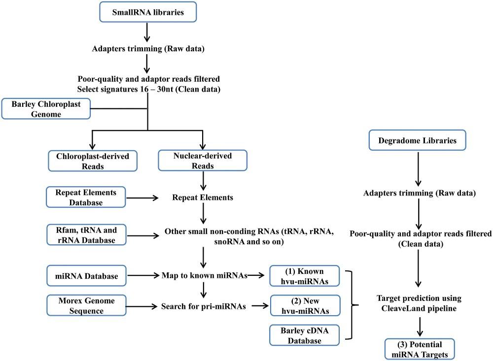 medium resolution of diagram of barley