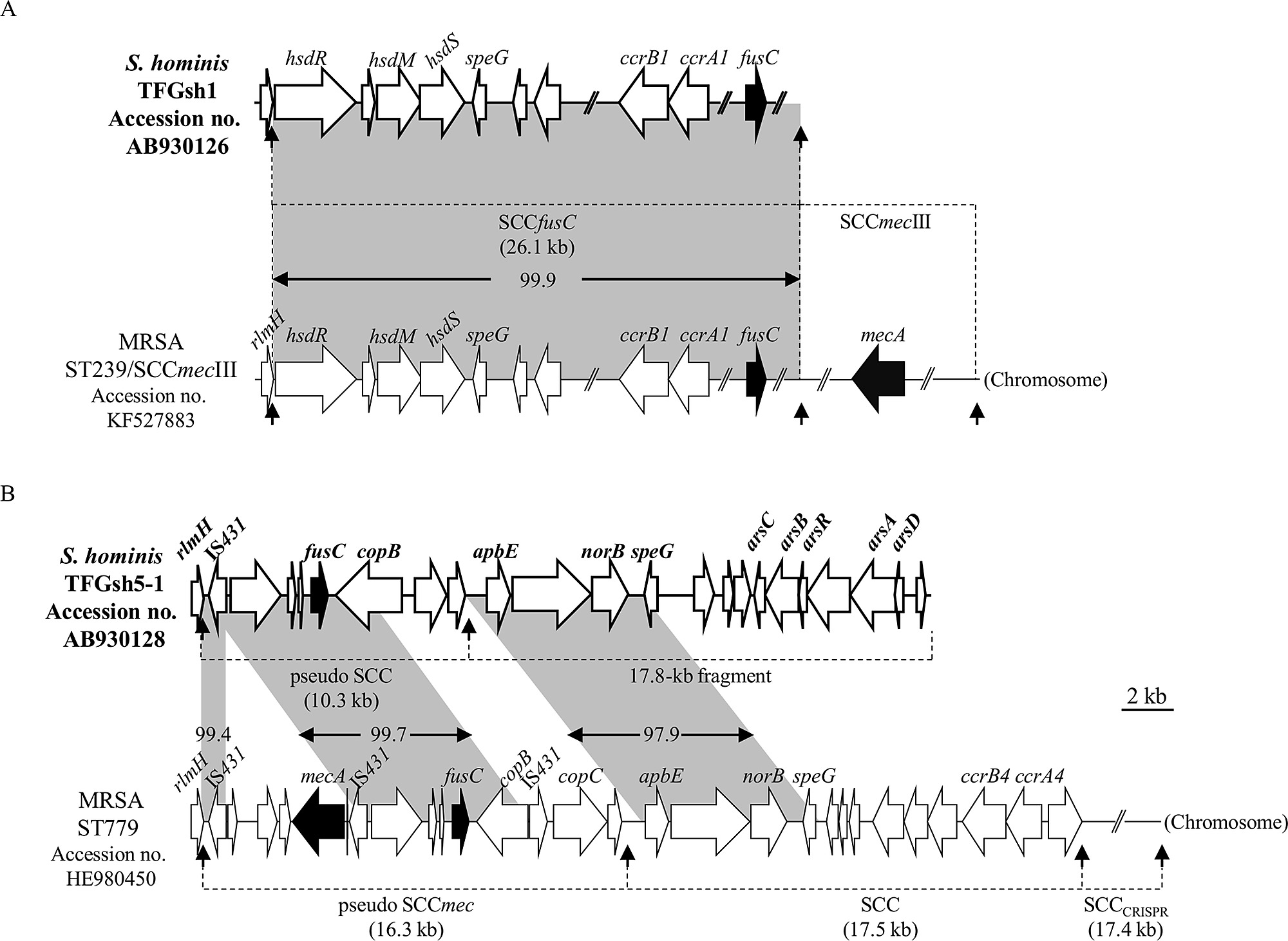 hight resolution of genetic organization of fusc related elements in s hominis subsp hominis