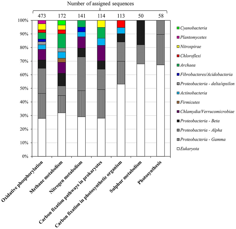 medium resolution of taxonomic assignment of metagenomic reads obtained from ec hot spring related to energy metabolism kegg identifiers