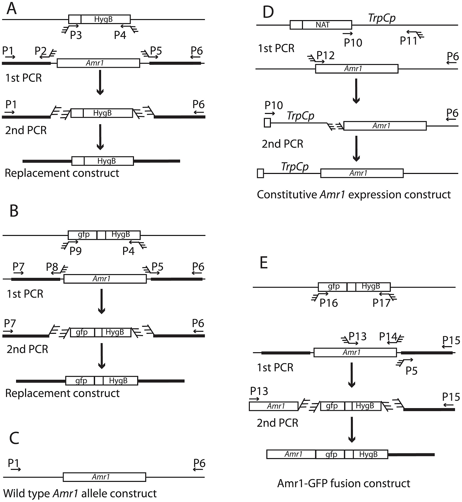 hight resolution of pcr schematic diagram