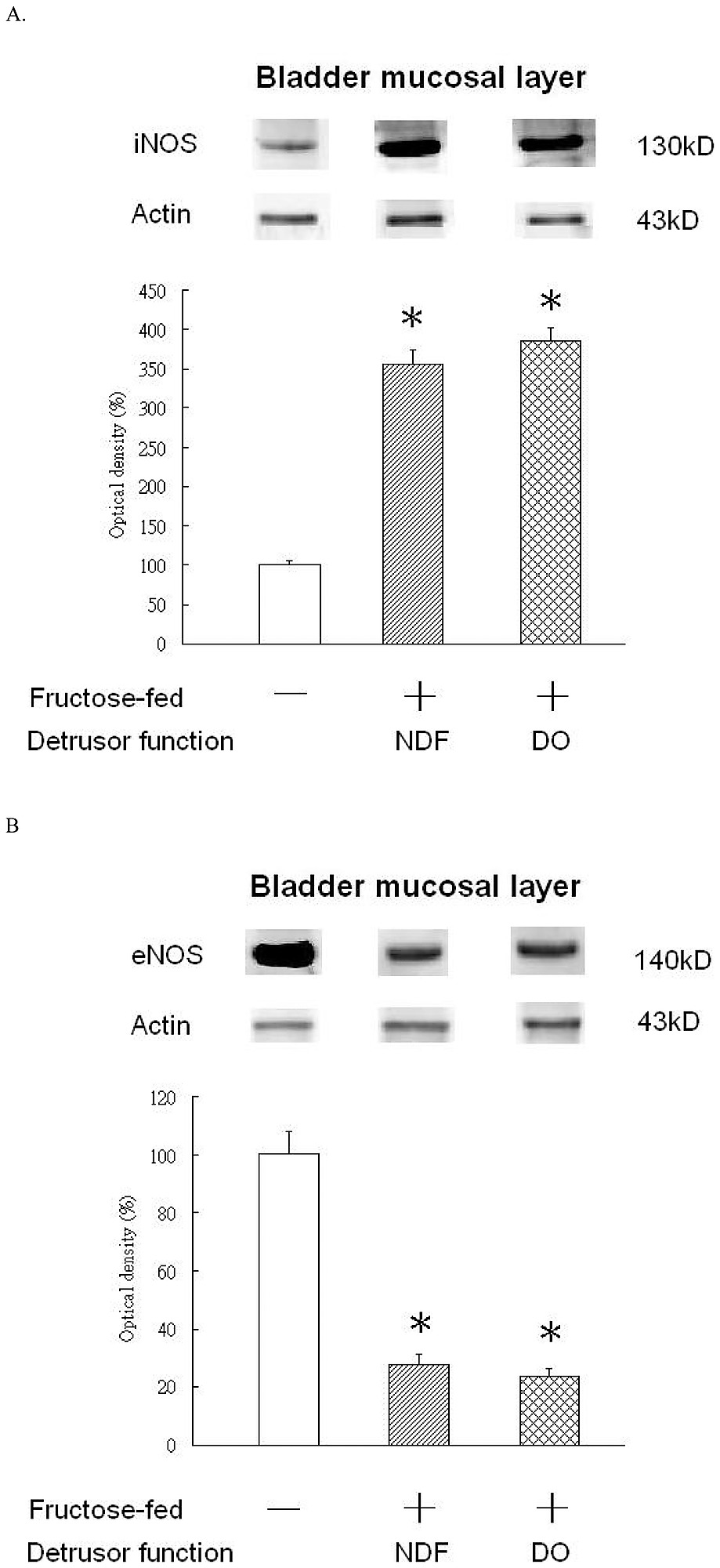 hight resolution of bladder mucosa diagram