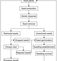 plant seed germination diagram [ 1404 x 1964 Pixel ]