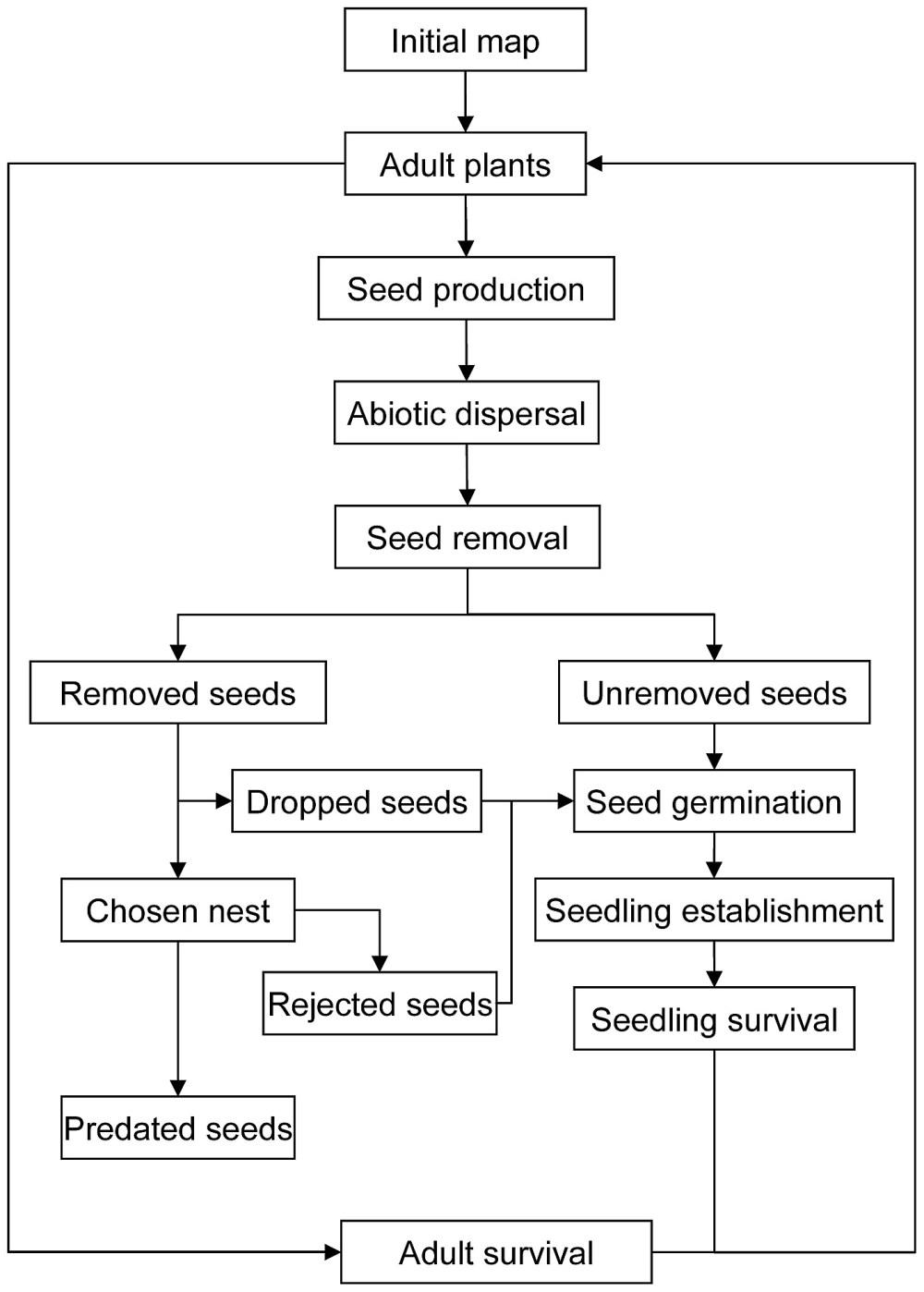 medium resolution of plant seed germination diagram