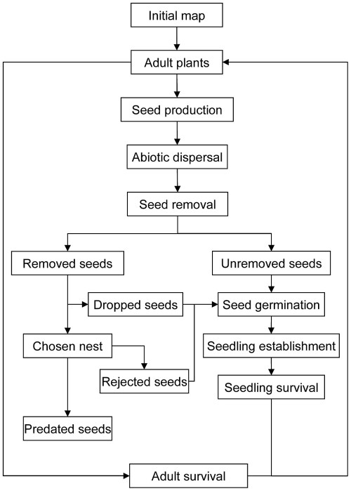 small resolution of plant seed germination diagram
