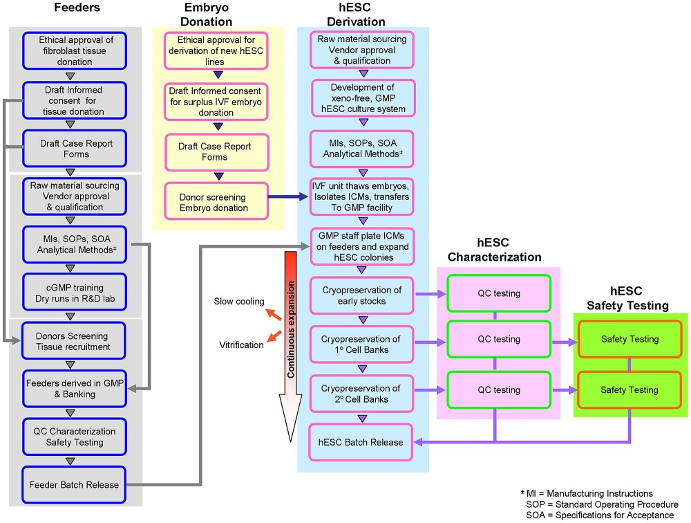 medium resolution of process flow diagram of the approach taken in deriving xeno free clinical grade fibroblast feeders and hescs