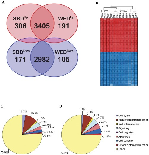 small resolution of gene expression analysis of cleavage stage blastomere derived and blastocyst stage icm derived hesc lines