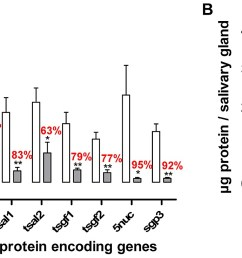 effects of the t brucei salivary gland infection on tsetse fly salivary protein expression  [ 1433 x 736 Pixel ]