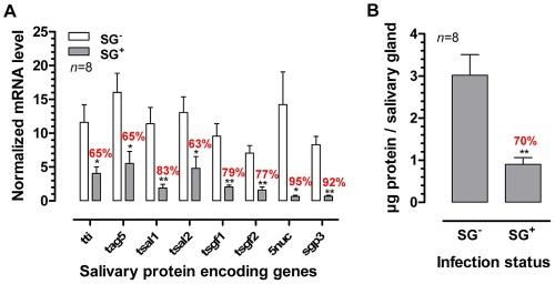 small resolution of effects of the t brucei salivary gland infection on tsetse fly salivary protein expression