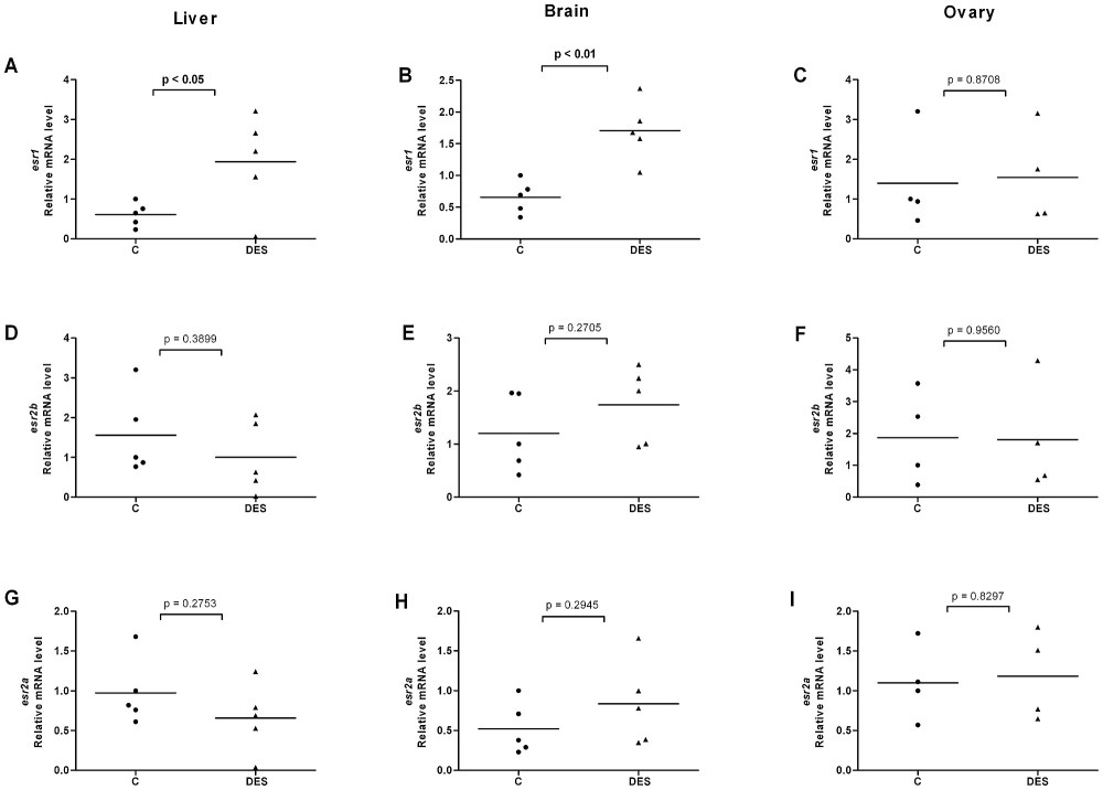 medium resolution of effects of diethylstilbestrol on esr expression in liver brain and ovary of female fish