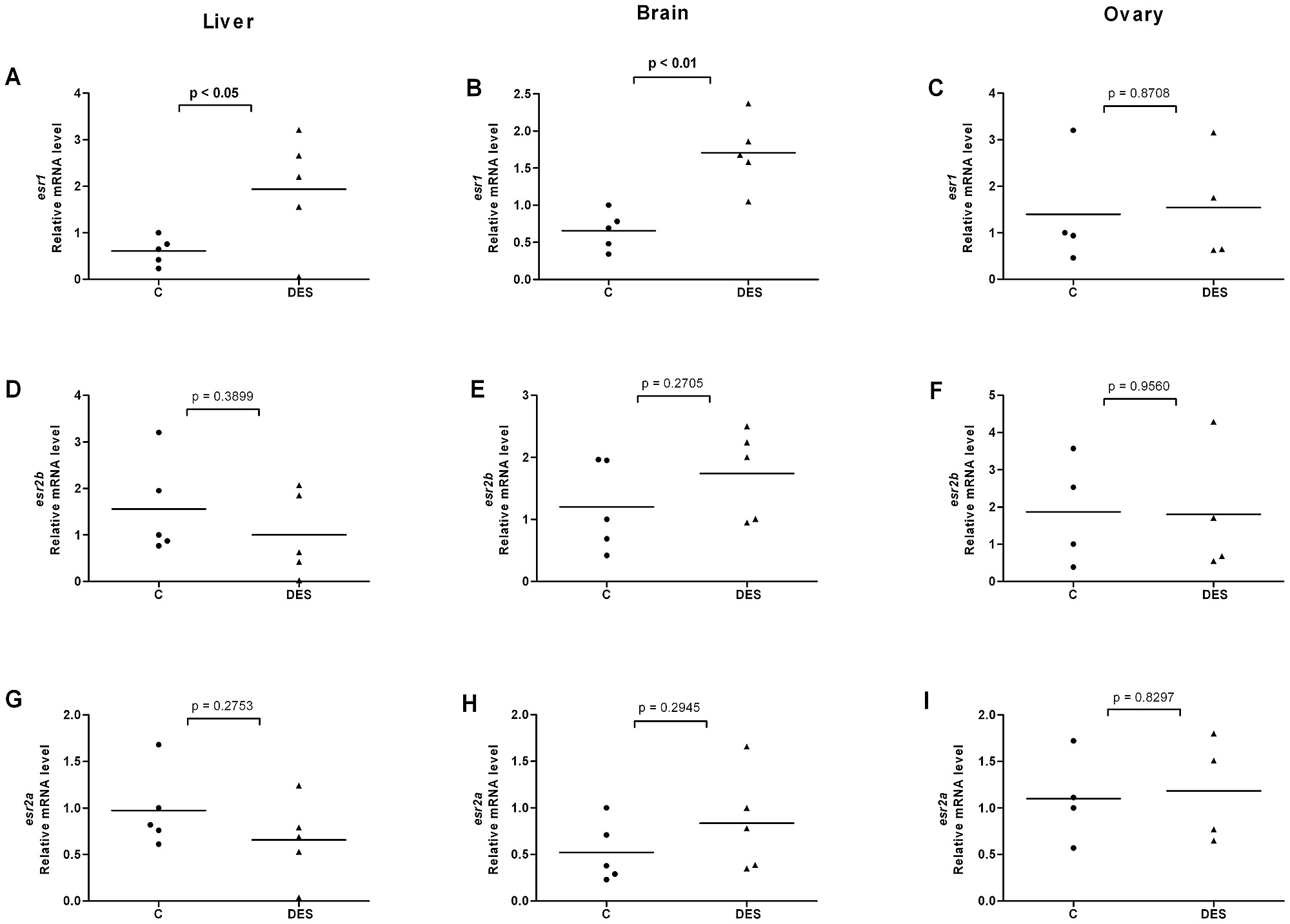 hight resolution of effects of diethylstilbestrol on esr expression in liver brain and ovary of female fish