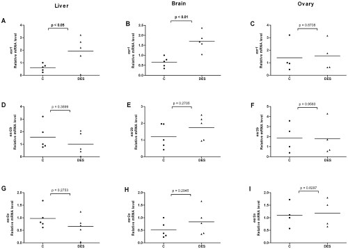 small resolution of effects of diethylstilbestrol on esr expression in liver brain and ovary of female fish