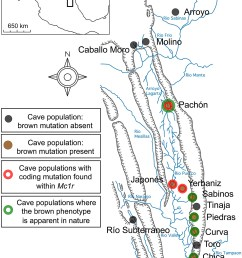 schematic map and localities of cave and surface populations of the mexican tetra astyanax mexicanus  [ 1408 x 1912 Pixel ]