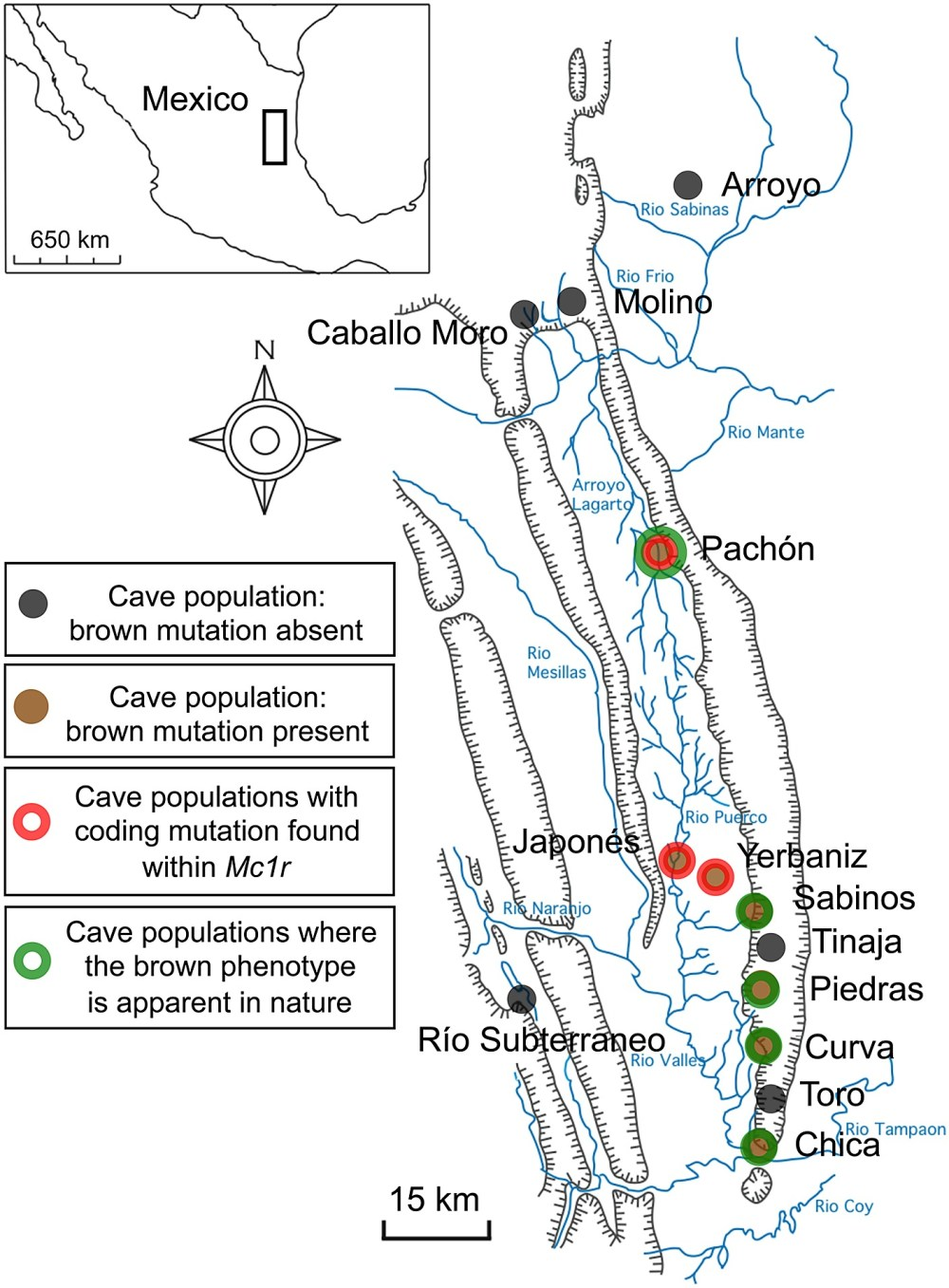 medium resolution of schematic map and localities of cave and surface populations of the mexican tetra astyanax mexicanus