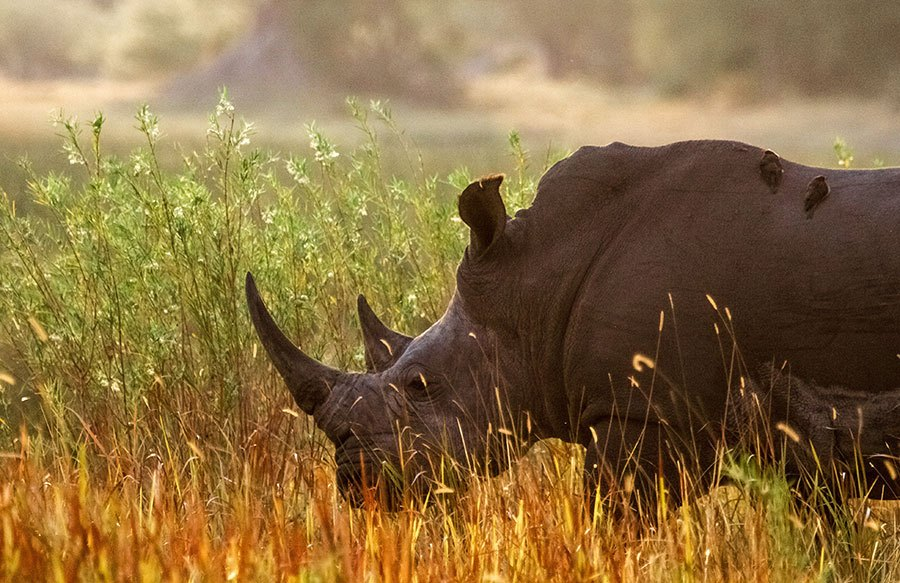 Victoria Falls Wallpaper Rhino Africa Blog Stories And Info Guides From Africa S