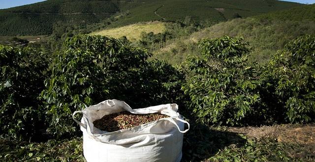 La demande du café provoque un fossé économique et écologique dans les pays pauvres