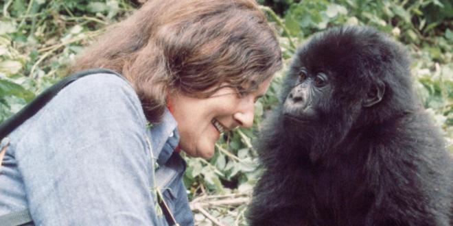 Diane Fossey, la femme qui a donné sa vie pour les gorilles