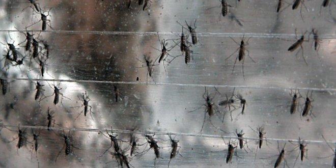 Etat d'urgence au Brésil à cause d'un virus qui rétrécit le cerveau des nouveau-nés