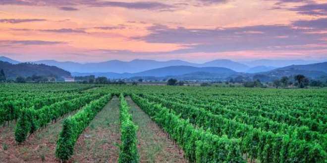 Le changement climatique a été bon pour les viticulteurs, mais cela pourrait changer