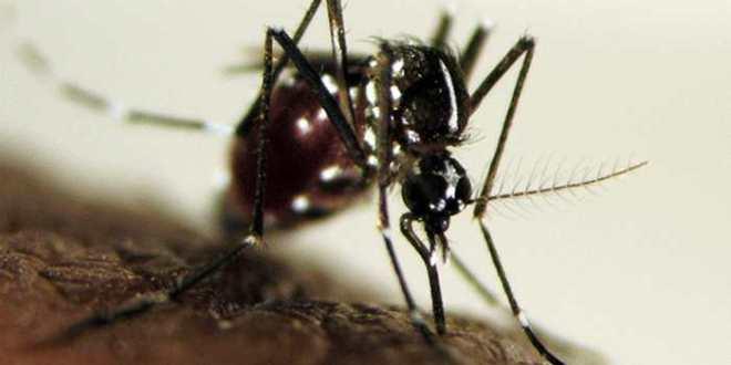 Dengue, chikungunya, zika : évaluer la lutte antivectorielle