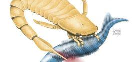 De nouvelles hypothèses sur les Scorpions de mer