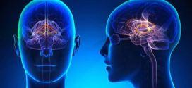 Les cerveaux des élèves se synchronisent dans une classe