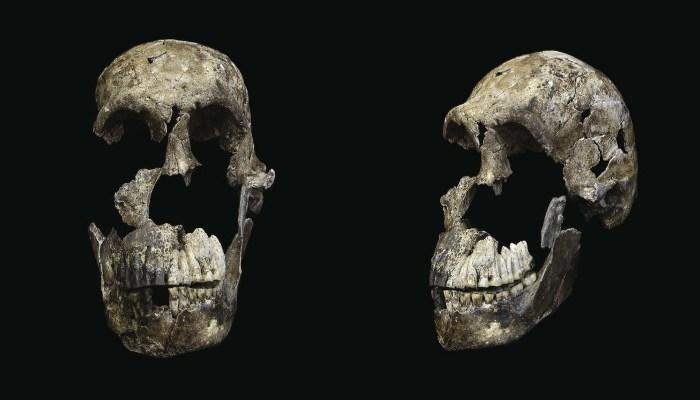 L'Homo Naledi est très jeune et il a vécu avec les humains modernes