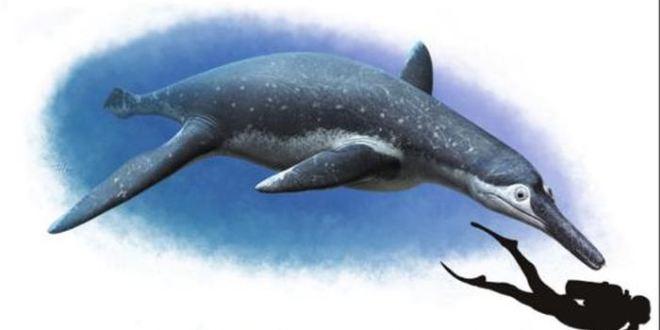 Luskhan itilensis, une nouvelle espèce de Pliosaure